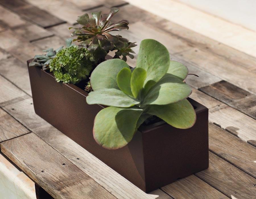 Decorar con plantas el salón